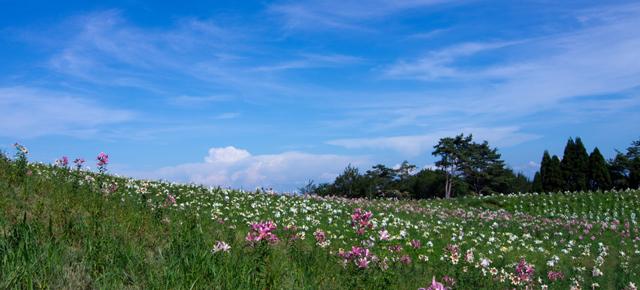 テーマ:夏の花