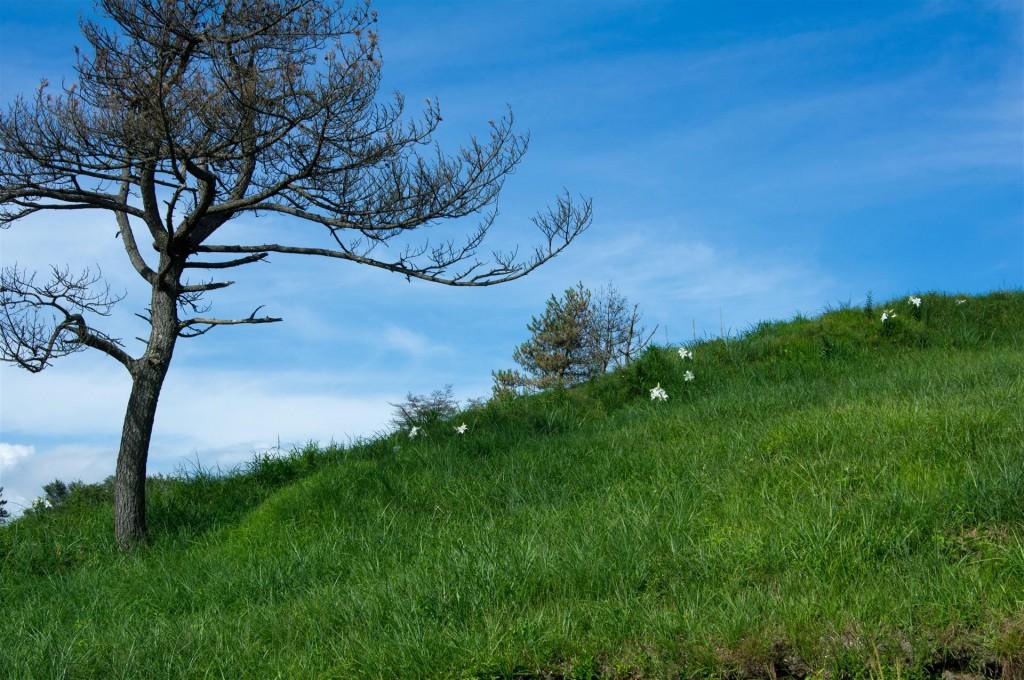 枯れ木と白い花