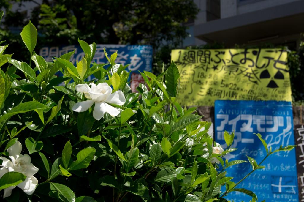 反原発デモの看板と一輪の花