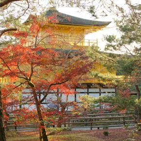 京都、金閣寺の紅葉