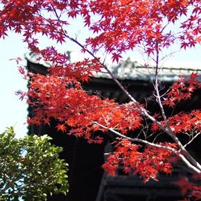京都・東福寺の紅葉